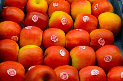 Mehmet_pinklady_appels